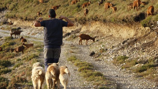 Rubén López, un joven ganadero que trabaja en Allande (Asturias).