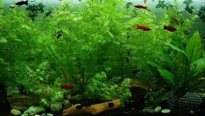 Imagen de un acuario.