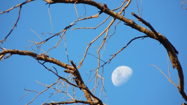 Árbol de la Luna.
