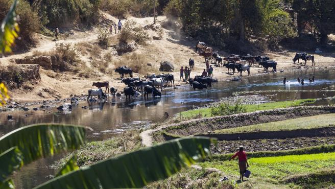 El acceso al agua es complicado en algunas zonas del planeta como Ampefy, en el centro de Madagascar (África).