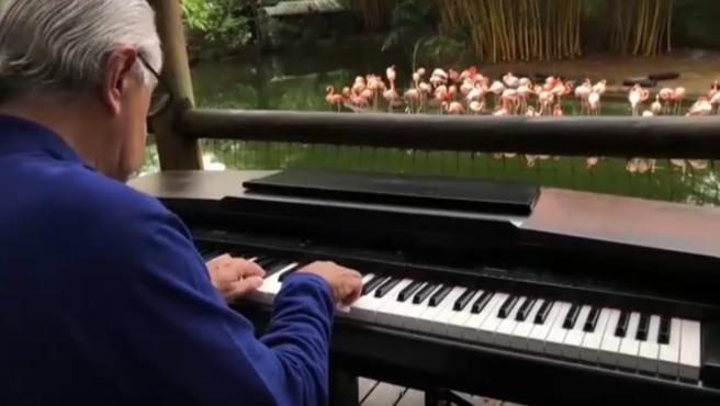 El pianista tocando en el zoo de Colombia.