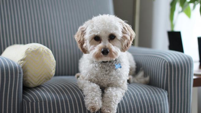 Imagen de archivo de un perro tumbado.