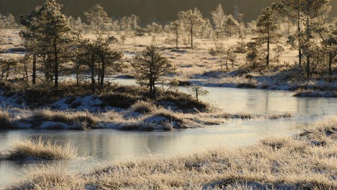 Una ciénaga en Riisa, en el Parque Nacional de Soomaa, en Estonia.