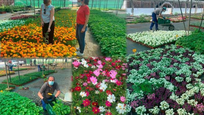 Archivo - Comienza el reparto de unas 37.000 plantas ornamentales de la Diputación de Cáceres a los municipios de la provincia
