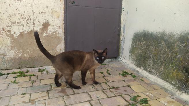 Gato en Cuenca
