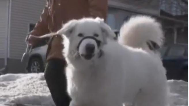 Clover, la perra que ha salvado la vida de su dueña.