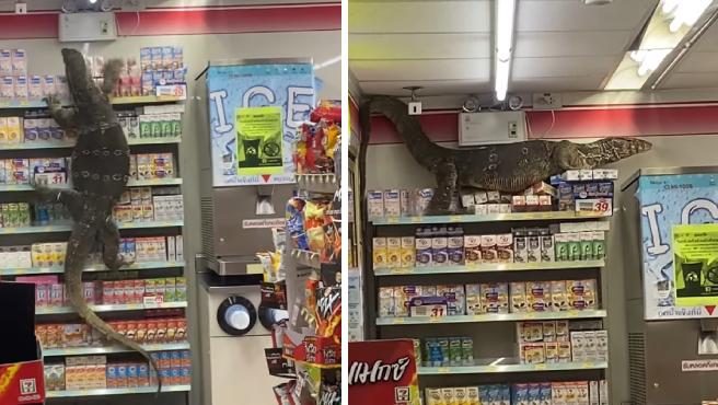 Hay personas que se encuentran enormes arañas en sus casas -sobre todo en Australia-, polillas gigantes en la calle o gatos callejeros en tiendas, pero desde luego que los dependientes de este supermercado no esperaban tener como 'cliente' a un gigantesco lagarto.
