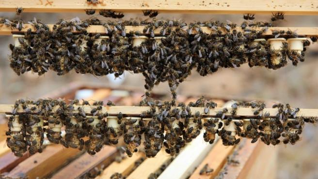 Archivo - El Gobierno de Canarias abre la convocatoria de ayudas a la producción de miel por 539.000 euros