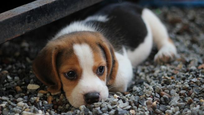 Imagen de archivo de un cachorro de perro.
