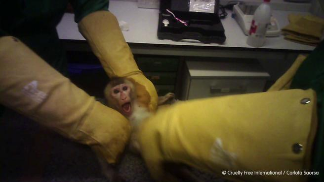 Maltrato animal en Vivotecnia.