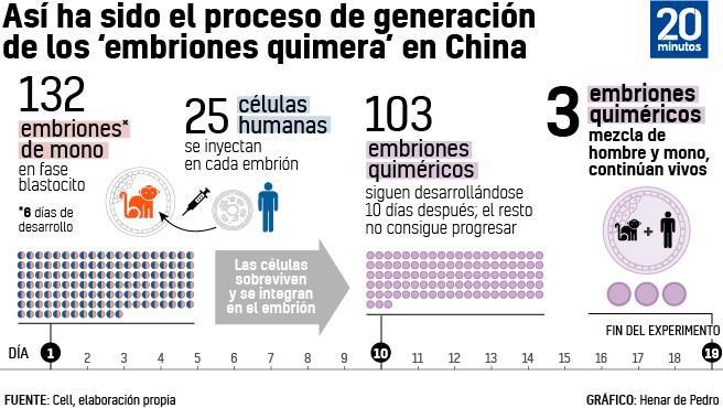 Proceso de generación de los embriones quimera.