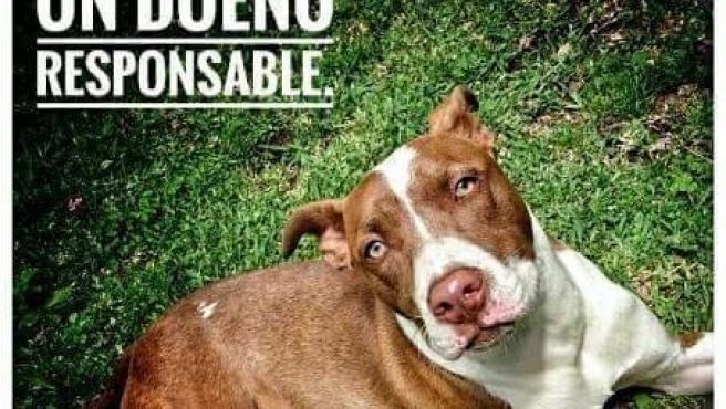 Archivo - Cartel de la Policía instando a los dueños de perros potencialmente peligrosos a ser responsables