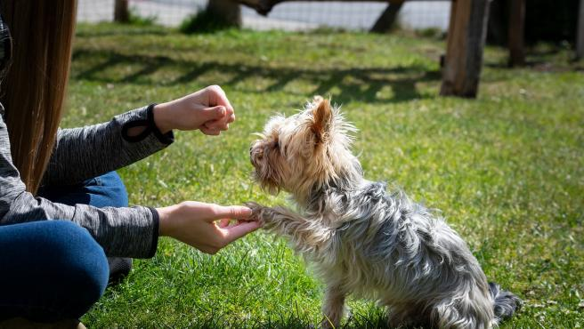 Un perro dando la pata.