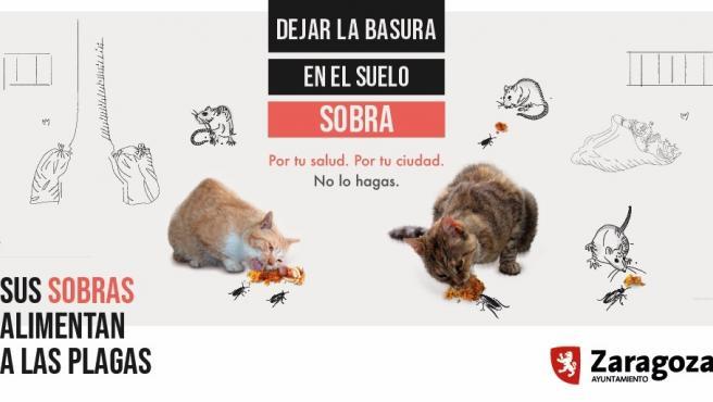 Cartel que alerta del riesgo que tiene dar de comer a palomas, patos o gatos en la vía pública en Zaragoza