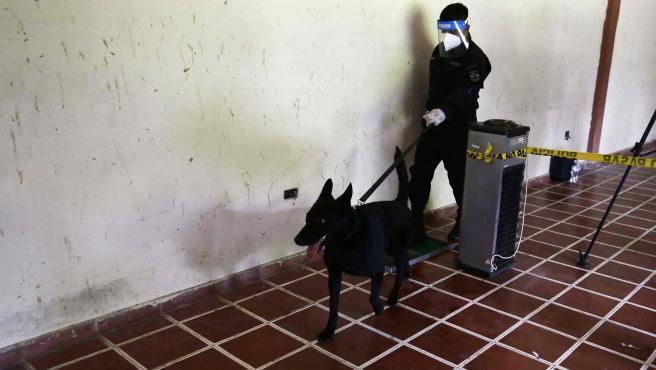 Un perro entrenado bajo el método Arcón, es llevado a realizar un ejercicio de demostración de detección de la covid-19.