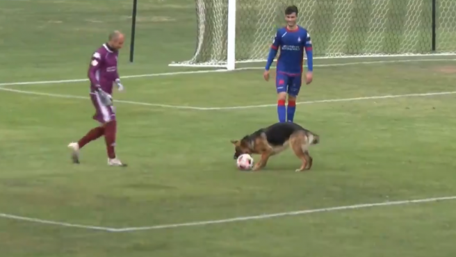 Un perro interrumpe un partido de Segunda B para llevarse el balón.