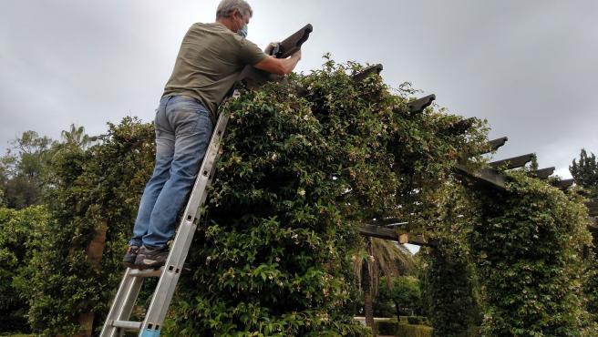 El parque de Benicalap concentra el 75% de las especies de murciélagos de València