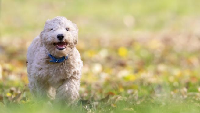 Especialmente los perros necesitan realizar cierto ejercicio físico diario y por eso es fundamental que salgan a la calle y desfoguen lo que necesiten.