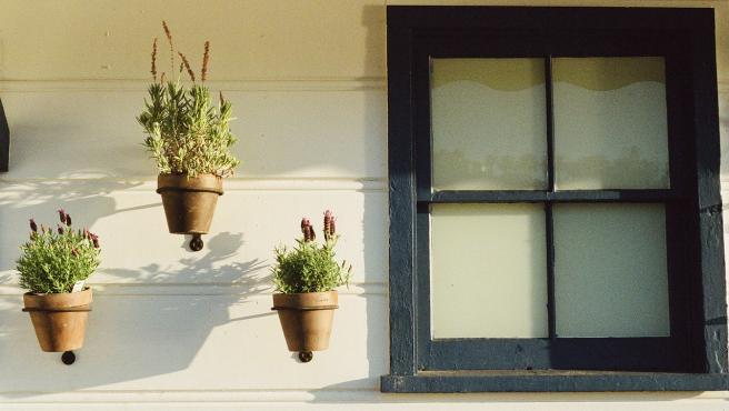 Unas plantas al sol.