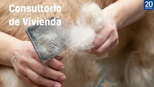 Una persona quita los pelos de su perro.