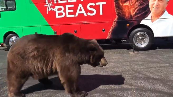 Los activistas critican el uso de un animal salvaje en la campaña.