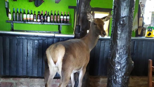 Bambi en el bar de Aladino Montes.