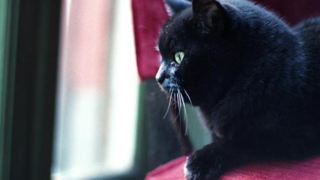 Gato mirando por la ventana.