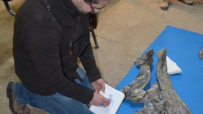 Un paleontólogo estudia el fósil del cráneo de un dinosaurio, en Ciudad de México.