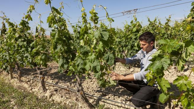 BODEGA MURUA apuesta por la viticultura ecológica y prevé alcanzar la totalidad de su viñedo en esta modalidad en 2026