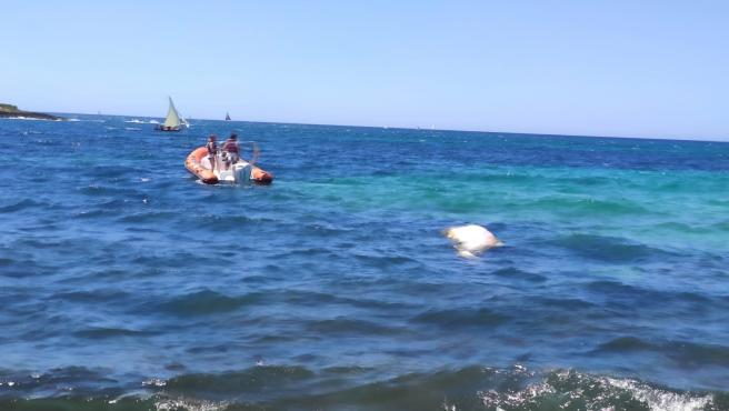 El cadáver de un cachalote en aguas de Es Carnatge (Palma de Mallorca).