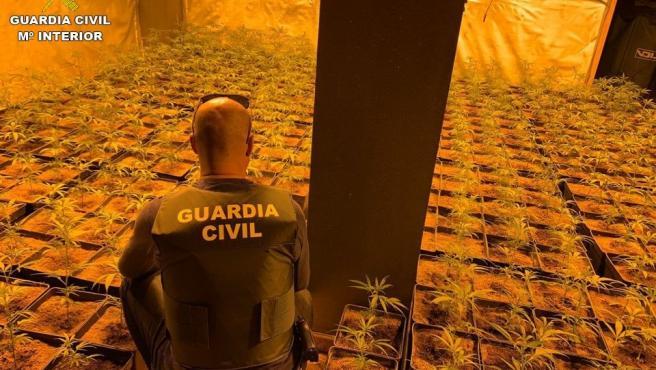 Guardia Civil detiene a dos individuos con 2.054 plantas de marihuana en dos chalés de Molina y Alicante