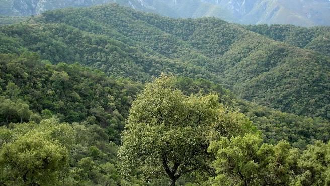 """Moreno ve """"más cerca"""" un """"anhelo de todos"""" con la aprobación del Parque Nacional Sierra de las Nieves"""