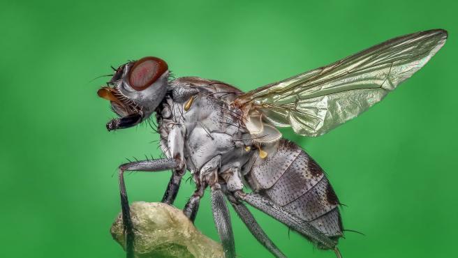 Una mosca en una imagen de archivo.