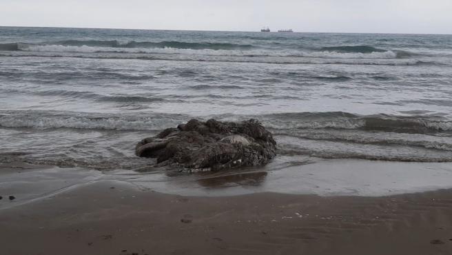 Sucesos.- Aparece el cadáver de un calamar gigante en la playa del Gurugú
