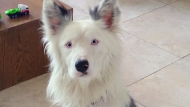 Blue, el perrito adoptado.