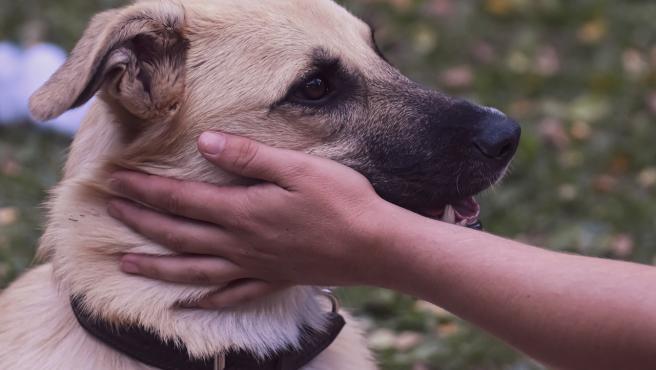 Una persona acaricia a un perro.