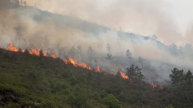 O Courel, Lugo. Incendio declarado en la noche del viernes al sábado. Más de 80 has. han ardido durante la jornada del sábado en la parroquia de Ferreirós de Abaixo. En la imagen, frente del fuego en la tarde del sá