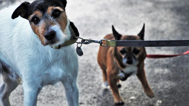 Dos perros.