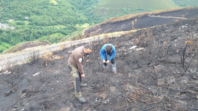 Los técnicos constatan que no hay riesgo de erosión ni escorrentía tras el incendio de Folgoso do Courel