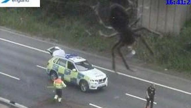 Una araña se cuela en la grabación de una cámara de tráfico de Inglaterra.