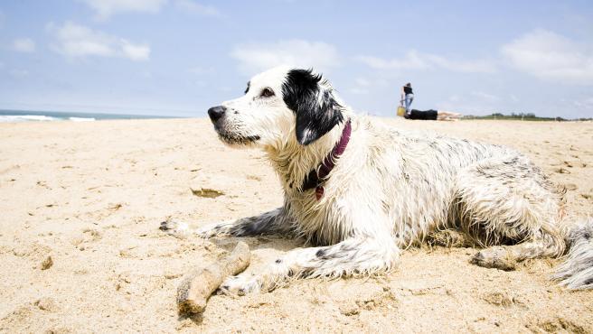 Perro en la playa.