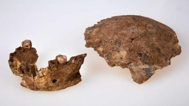 Nueva especie de Homo descubierta.