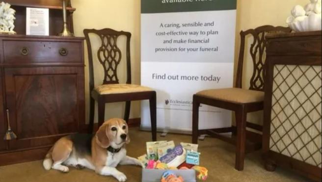 Basil, el perro que conforta a los familiares en los velatorios.