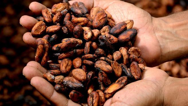 El cacao puro es uno de los alimentos más ricos en polifenoles