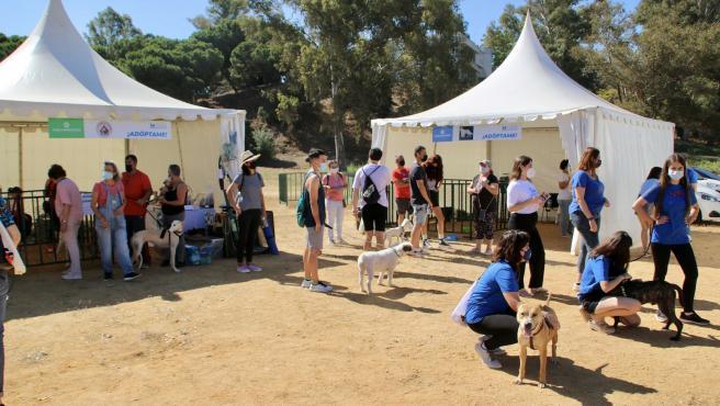 Una docena de asociaciones de animales participa en la I Feria de adopción de mascotas 'Huelva Protege'