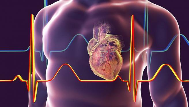 señales eléctricas latido corazon