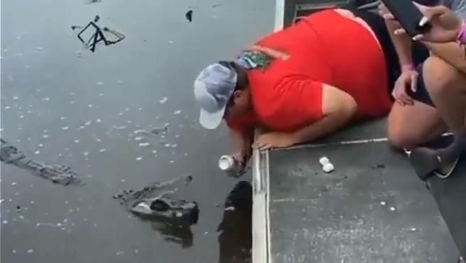 Abren una lata de cerveza con un caimán vivo.