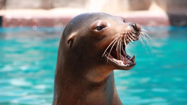 oso marino