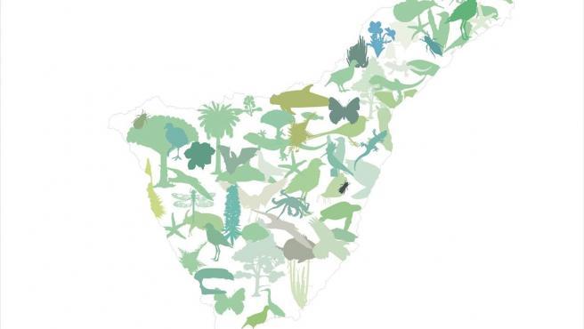 Cabildo de Tenerife, ayuntamientos y agentes sociales revisan la Estrategia Insular para la Biodiversidad