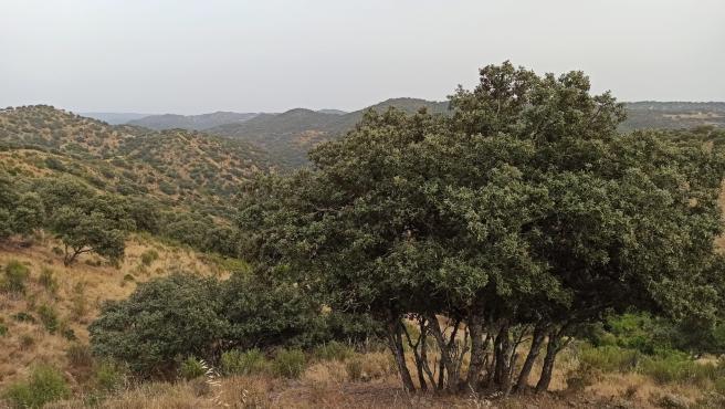 """Las Navas remite a la Junta """"toda la documentación"""" requerida sobre su referéndum de salida del parque natural"""